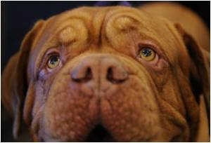 Global Snapshot of Canine Cancer Shows How to Control It