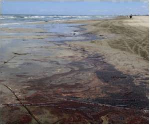 Bacteria That can Clean Up Oil Spill Identified