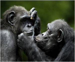 Mother Chimp may Play a Vital Role in Shaping Social Skills of Her Offsprings