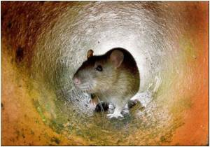 Genetically Defective Mice Useful in Understanding Human Depression