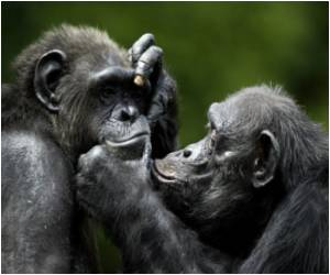Study Says Chimps Have Experimented With Sex More Than Humans