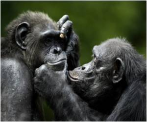 Chimpanzees Use Hand Gestures Similar to Humans to Communicate With Each Other