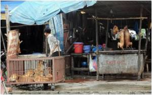 Vietnam Shuts Dog Slaughterhouses Over Cholera Fears
