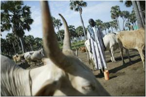 Sudan Reports 164 Deaths from Rift Valley Fever