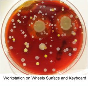 Magnified Images of Bacteria Boost Hand Hygiene Compliance
