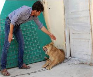 A Pet Lion Worth $20,000 That Lives on a Kabul Rooftop