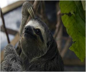Australian Anti-Marijuana Campaign With Stoned Sloth Provokes Giggles