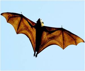 Foraging Bats can Warn Each Other Away from Their Food