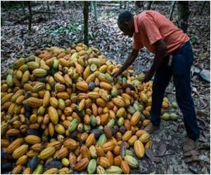 Brazil Stands Against Deforestation