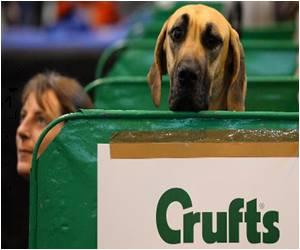 UK Top Dog Prize Won by Poodle Ricky