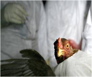Avian Flu Outbreak Confirmed in Chickens at a Farm in England