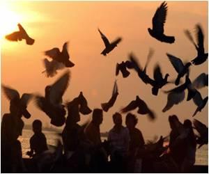 Second Bird Flu Death in Cambodia for 2014: Boy Dies of H5N1 Bird Flu