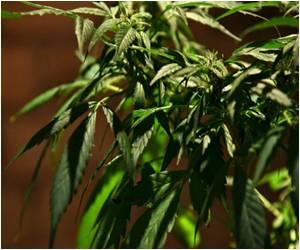 Canadians can Grow Their Own Medical Marijuana