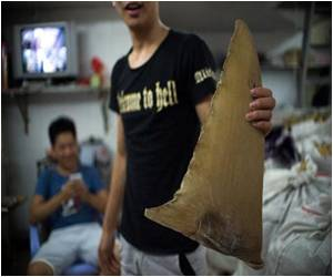 Tide Turns for Shark Fin in Chinese Market