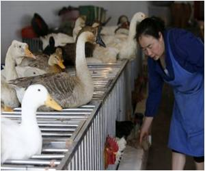 Experts Monitor Human-To-Human Spread of Bird Flu Virus