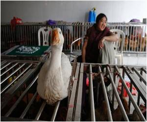 H7N9 Bird Flu Affects Three in a Single Chinese Family