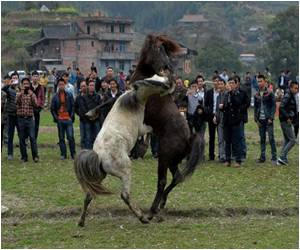 Year of the Horse Starts With a Battle of the Horses
