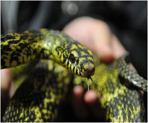 China's Snake Village Hopes to Prosper in the Year of the Snake