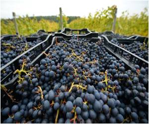 Climate Change: Good News for English Wine Industry