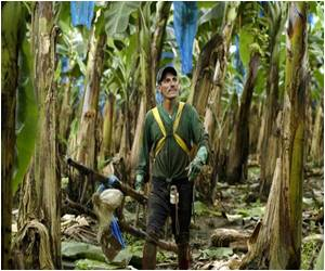 Costa Rica Government Agrees to Pay Compensation to Banana Workers Exposed to Pesticides