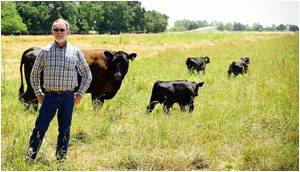 Cattle Disease Causing Bacteria Named by UC Davis Researchers