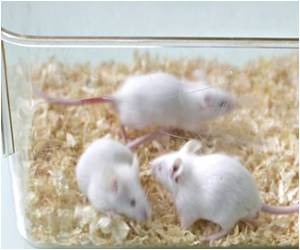 Shining Red Mice can Help Czechs Fight Skin Disease?