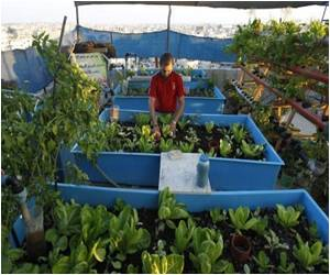 Tiny Rooftop Spaces Used for Producing Fish and Vegetables in Gaza