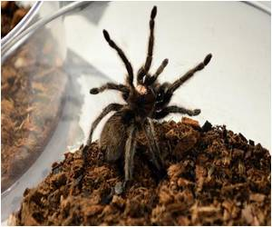 Spider Fears can be Dispelled in New York on July 4