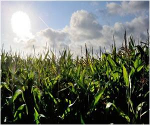 French Report Linking GM Corn to Cancer Dismissed by EU