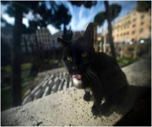 Rabies Alarm in France Prompts Treatment for Five Persons After Contact With Rabid Kitten