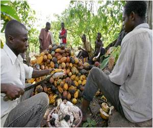Trader Turns 'ethical' Towards Cocoa Bean Sellers