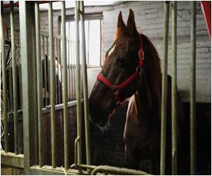 'Unhealthy' Horsemeat from Americas Uncovered by French Animal Lobby
