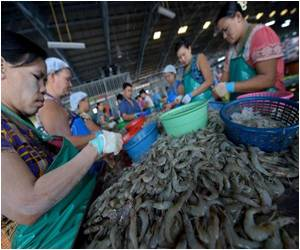 Prawn Industry Being Promoted by Thailand to Counter Slavery Row