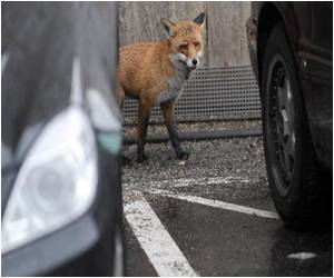 French Family Granted Permission to Keep Fox as a Pet