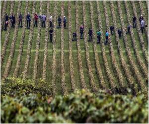 Burgundy's 2013 Harvest Has Produced Some Beautifully Balanced Wines