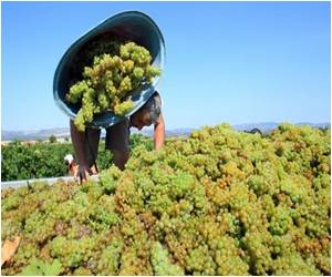 Bad Weather Conditions Might Cause Poor Wine Grape Harvest In France
