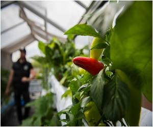 Fish-Farm Veggie Garden Pioneered by Berlin Start-Up