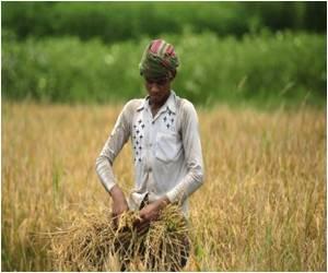 Lower Arsenic Bangladeshi Rice Strain Identified