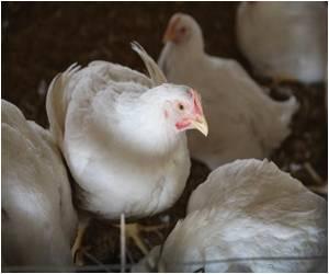 Bird Flu Outbreak Reported in Canada