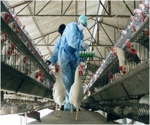 Cambodian Girl Dies from Bird Flu