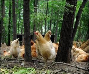 Bird Flu Outbreak Reported in China