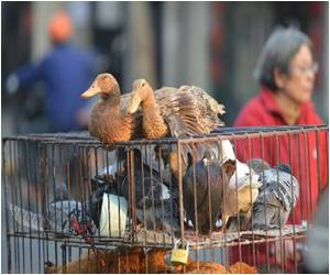 Two Deaths Reported in China Bird Flu Outbreak