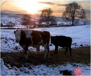 One in 2,000 in UK Carries Mad Cow Disease