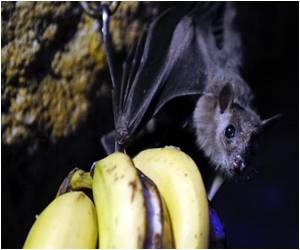 Double Virus in African Bats Pose Infection Risk for Humans