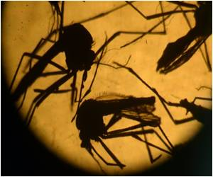 Zika Virus Linked to Third Disorder 'Myelitis'