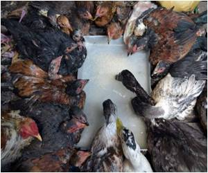 Cambodia: Action to Stop Deadly Bird Flu