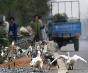 Chinese Officials Claim Two People Killed Due to New Strain of Avian Flu