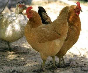 Government Orders Residents in China To Cull Poultry