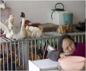 Duck Genome Takes Aim at Avian Influenza