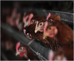 Eat Poultry Despite Bird Flu, Urge China Media